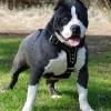 Cursuri Coafor Canin